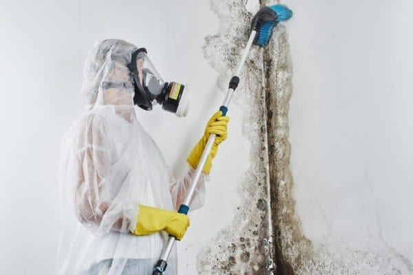 Professional mold inspector