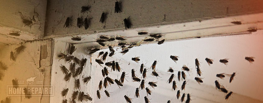 Attic flies clustering inside