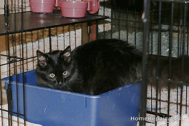 cat urine removal homerepairgeek
