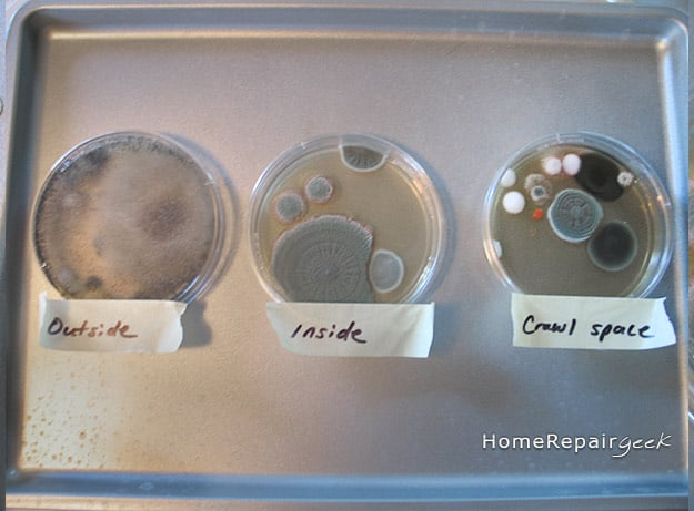 Mold Growing Around House Test Kits