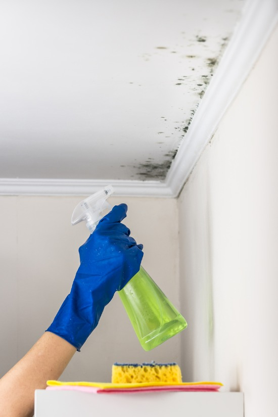 removing mold in the ceiling