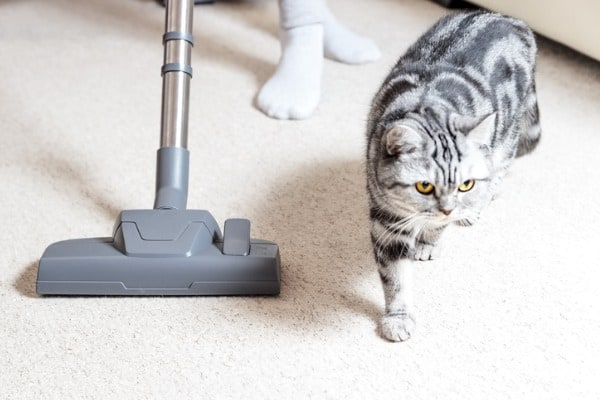 vacuum cleaner and cat