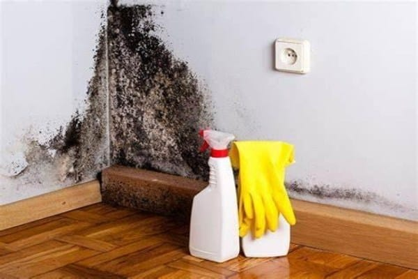 wall mold and cleaning tools